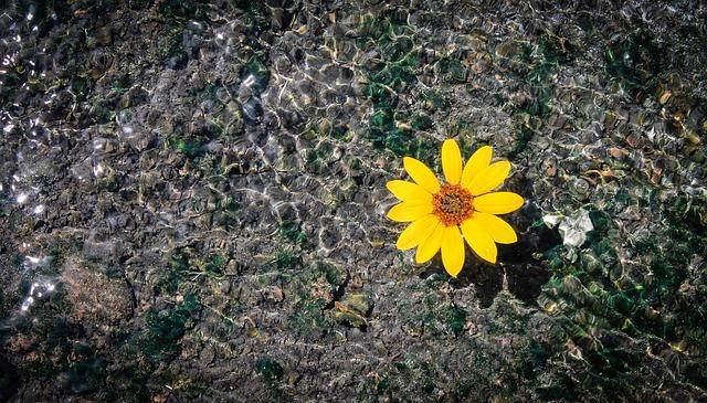 flower-828728_640
